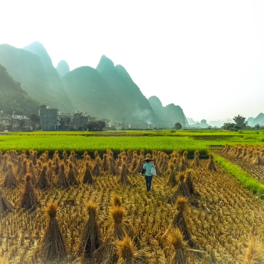 Woman in rice field guangxi